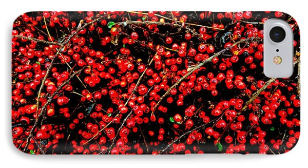 Winter Berries IPhone Case