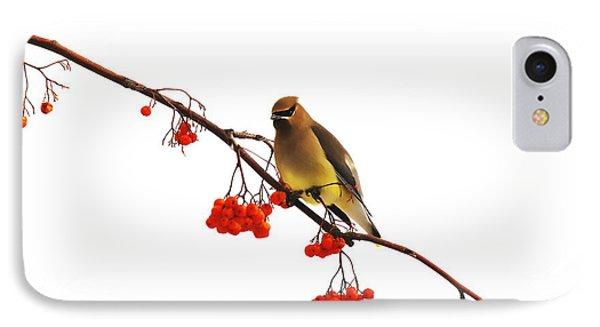 Winter Birds - Waxwing  IPhone Case