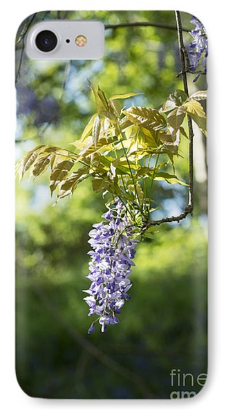 Wisteria Floribunda In Sunlight IPhone Case