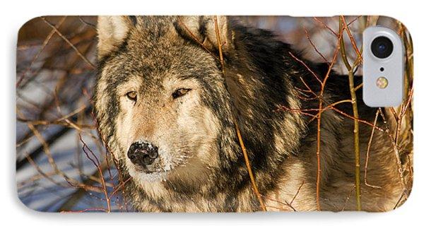 Wolf In Brush IPhone Case