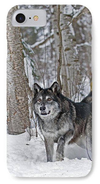 Wolf In Trees IPhone Case