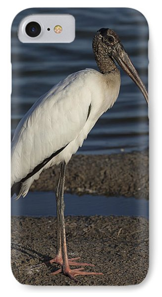 Wood Stork In The Final Light Of Day IPhone Case