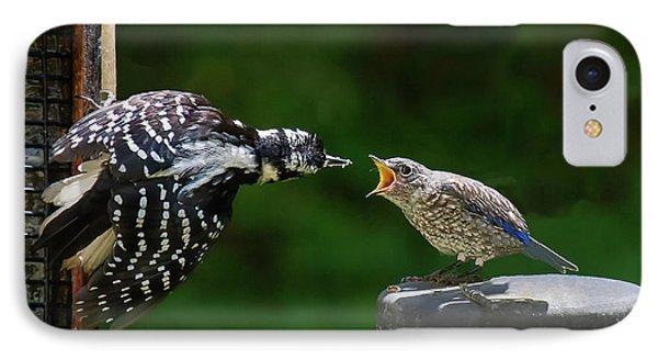 Woodpecker Feeding Bluebird IPhone Case
