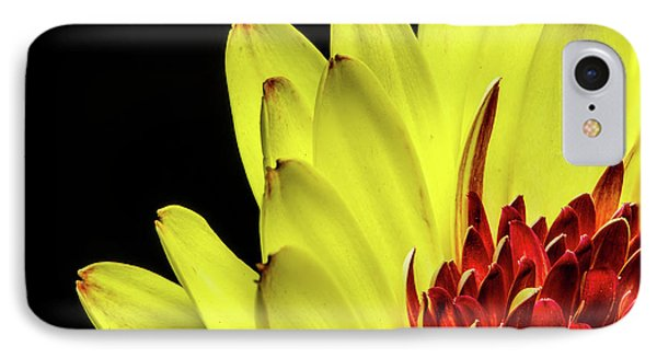 Yellow Daisy Peeking IPhone Case