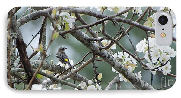 Yellow-rumped Warbler In Pear Tree IPhone Case