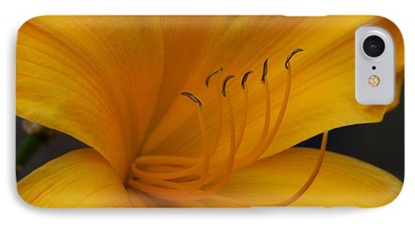 Yellow Tiger Lilly IPhone Case