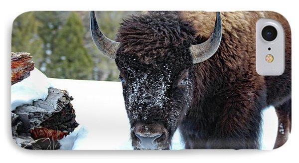 Yellowstone Buffalo Stare-down IPhone Case