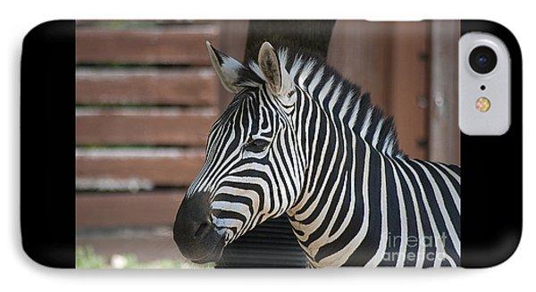 Zebra 20120718_150a IPhone Case