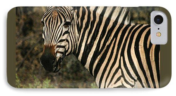 Zebra Watching Sq IPhone Case