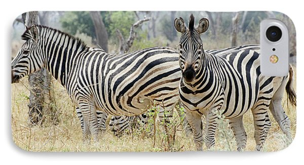 Zebras IPhone Case