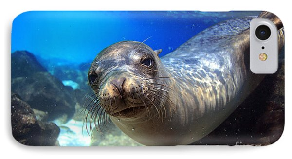 Beauty In Nature iPhone 8 Case - Sea Lion Swimming Underwater In Tidal by Longjourneys