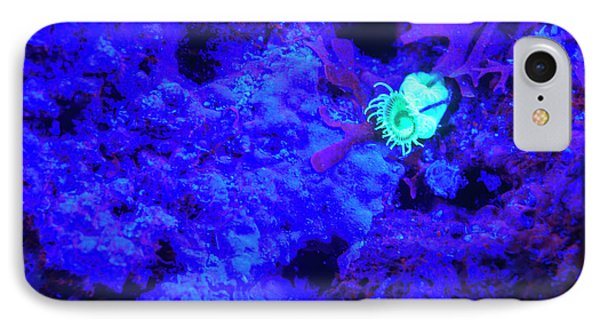 Belize iPhone 8 Case - Night Dive At Barrier Reef Near Saint by Stuart Westmorland