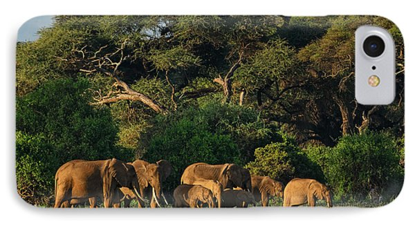 Republic Of South Africa iPhone 8 Case - African Bush Elephant - Loxodonta by David Havel