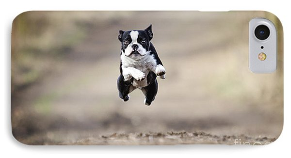 Puppies iPhone 8 Case - Beautiful Fun Young Boston Terrier Dog by Best Dog Photo