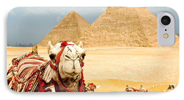 Egyptian iPhone 8 Case - Camel  In Egypt by Nutsiam
