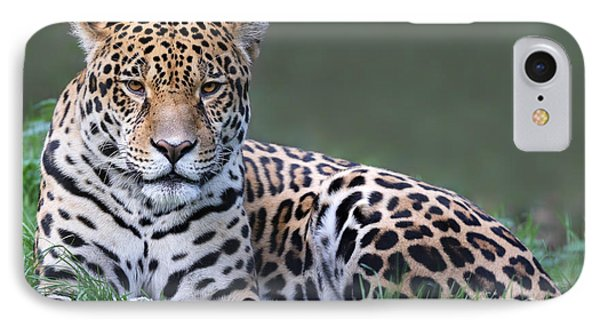Belize iPhone 8 Case - Close-up View Of A Jaguar Panthera Onca by Henner Damke