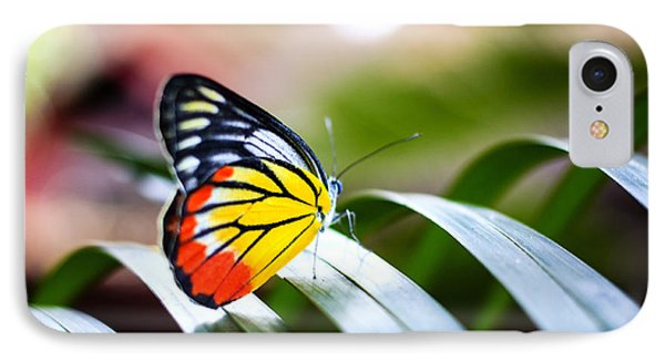 Beauty In Nature iPhone 8 Case - Colorful Butterfly Resting On The Palm by Rrrainbow