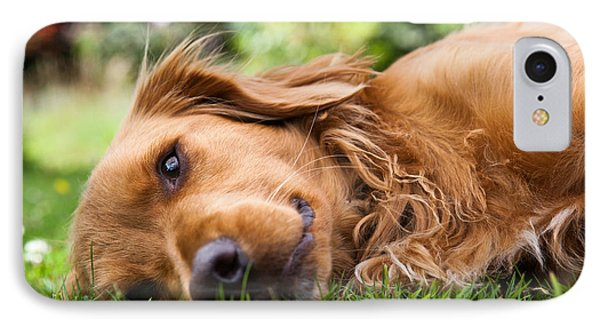 Puppies iPhone 8 Case - Dog Lieing On Its Side Looking Into The by Sam Chadwick