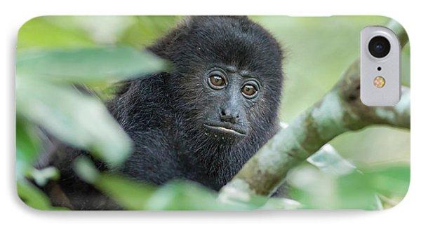 Belize iPhone 8 Case - Juvenile Black Howler Monkey, Community by William Sutton