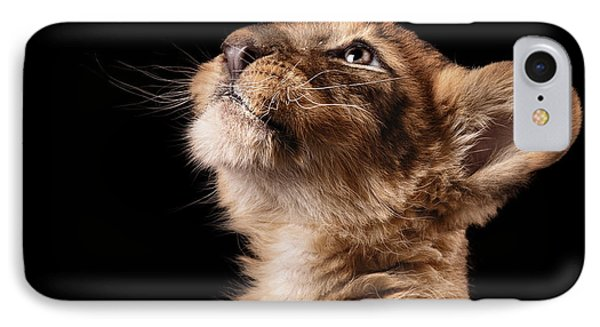 Small iPhone 8 Case - Little Lion Cub In Studio On Black by Ekaterina Brusnika