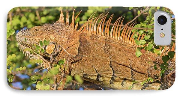 Belize iPhone 8 Case - Male Green Iguana, In Breeding Plumage by William Sutton