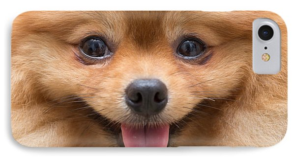 Puppies iPhone 8 Case - Puppy Pomeranian Dog Cute Pets In Home by Suti Stock Photo