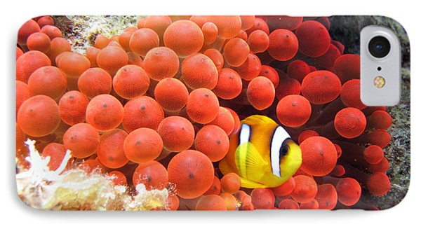 Egyptian iPhone 8 Case - Red Sea Anemonefish In Red Anemone by Laura Dinraths