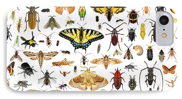 Collage iPhone 8 Case - Set Of Insects On A White Background by Protasov An