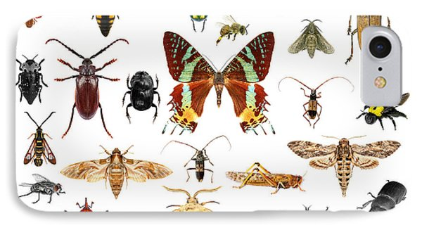 Collage iPhone 8 Case - Set Of Insects On White Background by Protasov An