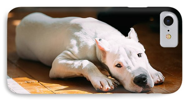 Puppies iPhone 8 Case - The Dogo Argentino Also Known As The by Grisha Bruev
