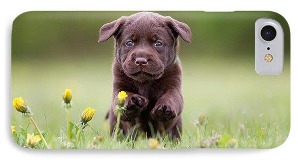 Puppies iPhone 8 Case - Young Puppy Of Brown Labrador Retriever by Bigandt.com