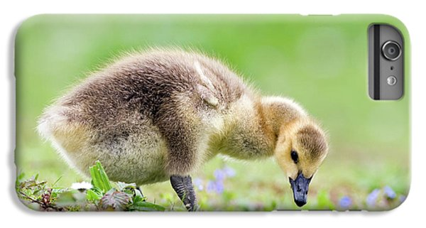 Gosling iPhone 8 Plus Case - Canada Goose by John Devries/science Photo Library