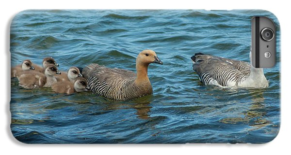 Gosling iPhone 8 Plus Case - Falkland Islands, Bleaker Island by Jaynes Gallery