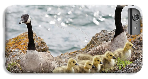 Gosling iPhone 8 Plus Case - Usa, Washington, San Juan Islands by Jaynes Gallery