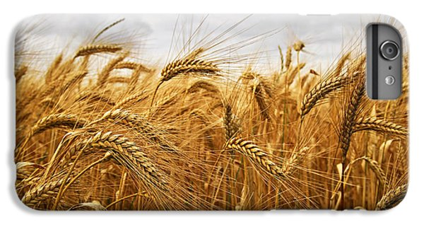 Rural Scenes iPhone 8 Plus Case - Wheat by Elena Elisseeva