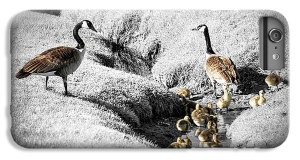 Gosling iPhone 8 Plus Case - Canada Geese Family by Elena Elisseeva