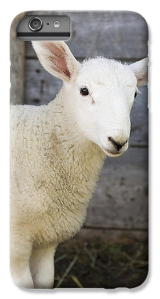 Sheep iPhone 8 Plus Case - Close Up Of A Baby Lamb by Michael Interisano