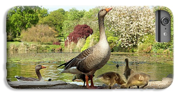Gosling iPhone 8 Plus Case - Grey Geese And Goslings by Daniel Sambraus/science Photo Library