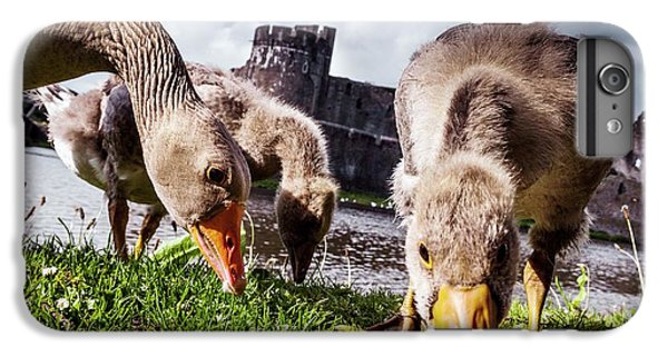 Gosling iPhone 8 Plus Case - Greylag Geese Grazing by Paul Williams