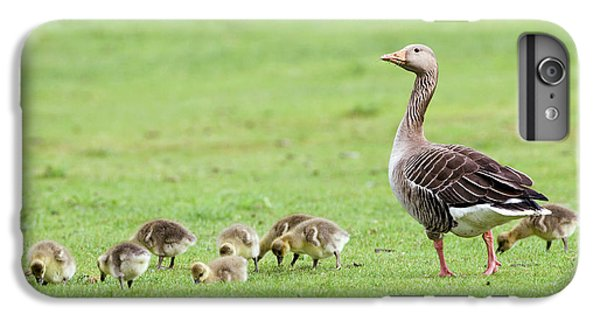 Gosling iPhone 8 Plus Case - Greylag Goose And Goslings by John Devries/science Photo Library