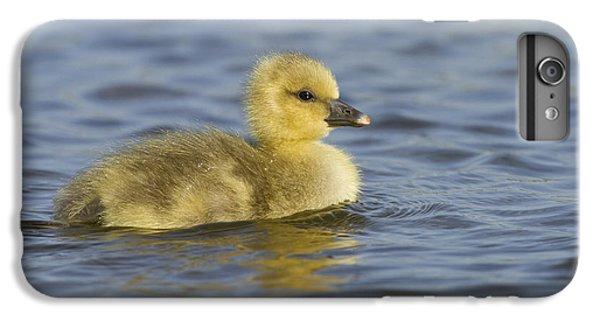 Gosling iPhone 8 Plus Case - Greylag Goose Gosling Zeeland by Sytze Jongma