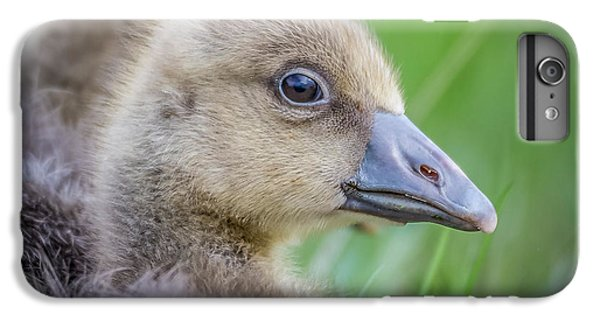 Gosling iPhone 8 Plus Case - Greylag Goslings, Iceland by Panoramic Images