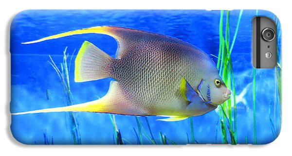 Scuba Diving iPhone 8 Plus Case - Into Blue - Tropical Fish By Sharon Cummings by Sharon Cummings