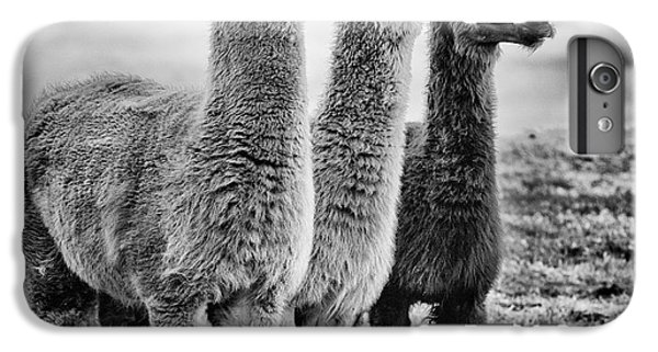 Rural Scenes iPhone 8 Plus Case - Lama Lineup by John Farnan