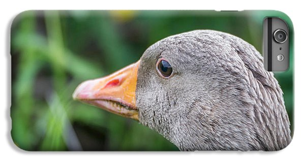 Gosling iPhone 8 Plus Case - Portrait Of Greylag Goose, Iceland by Panoramic Images