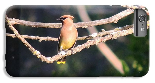 iPhone 8 Plus Case - Sunbathing Cedar Waxwing  by Red Cross