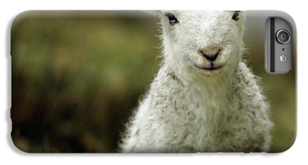 Rural Scenes iPhone 8 Plus Case - The Lamb by Angel Ciesniarska