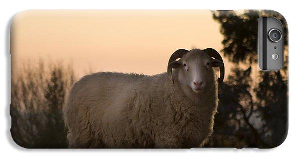 Sheep iPhone 8 Plus Case - The Lamb by Angel Ciesniarska