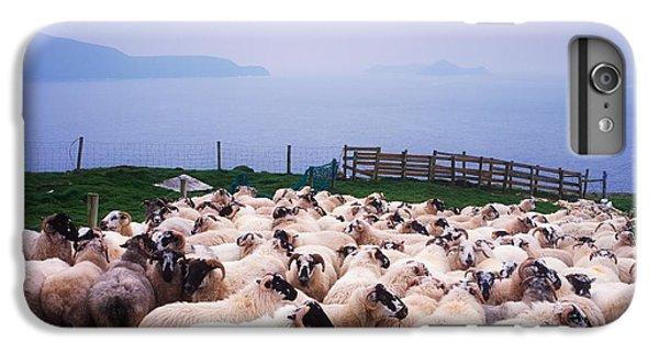 Sheep iPhone 8 Plus Case - Herding Sheep, Inishtooskert, Blasket by The Irish Image Collection