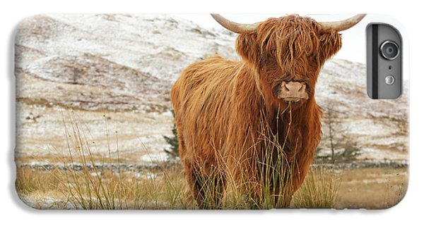 Cow iPhone 8 Plus Case - Highland Cow by Grant Glendinning